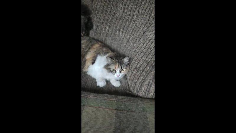 Видео от Группа им Мурки Пулковской Помощь Крымским котам