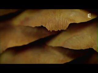 Video von Irina Tschistjakowa