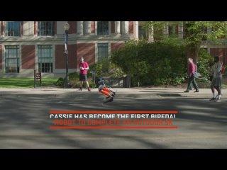 OSU Bipedal Robot First to Run