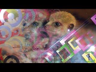 Видео от Дом Культуры Лесобазы
