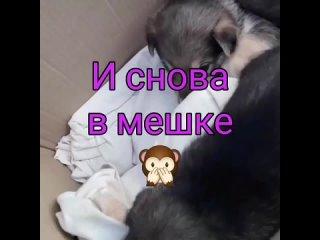 Larisa Burovatan video