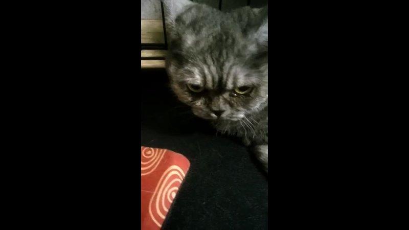 Видео от Ирины Лисовой