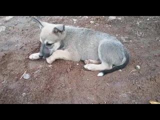 ВОЛОНТЕРСКИЙ АКТИВ «БАРБОСКИН&» kullanıcısından video