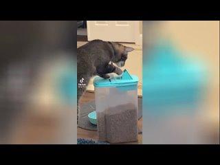 Попался: укравший корм кот-гурман рассмешил Сеть