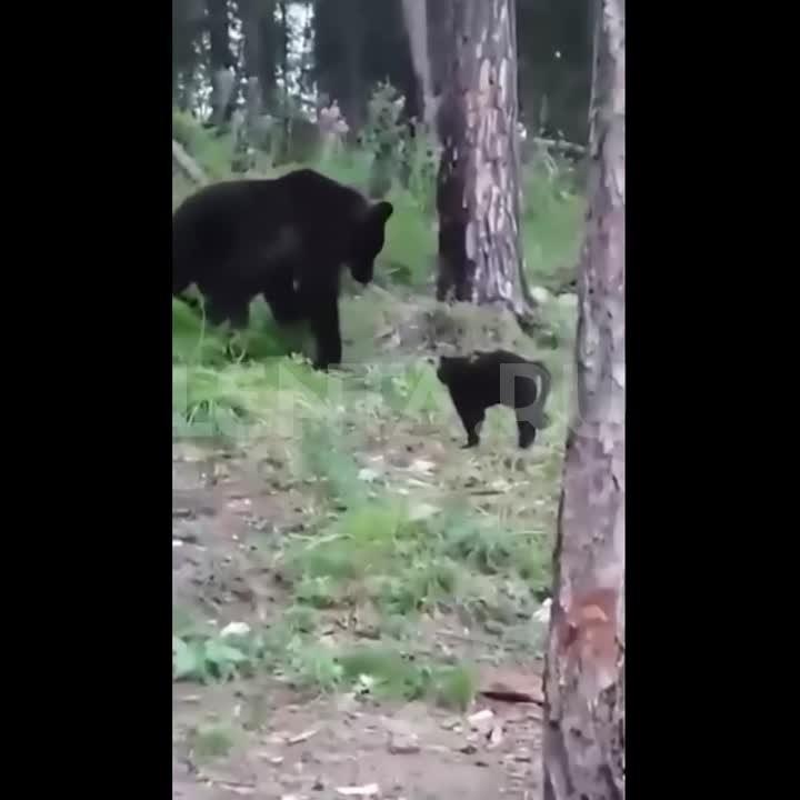 В Якутии кот Василий прогнал медведя и