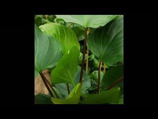 Video by Растения в интерьере. Комнатные цветы.