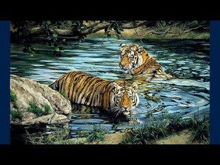 Мини презентация.  Тигры