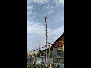 Видео от Treemaster74 Спил деревьев, Челябинск