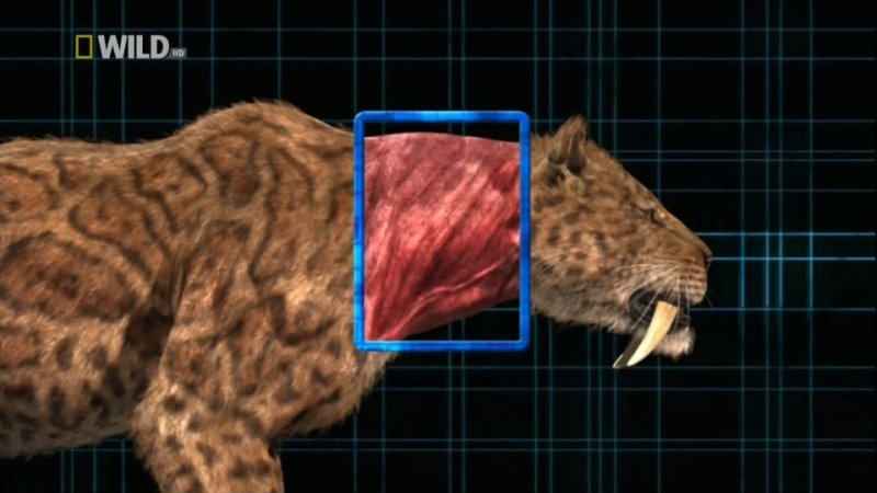 Доисторический хищник саблезубый тигр
