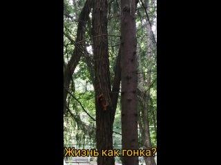 Vídeo de Rezida Nazyrova