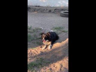 Видео от Верный Друг Помощь бездомным животным. Караганда