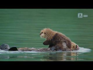 «Невозможные животные с Патриком Арье (03). Побережье» (Познавательный, природа, флора, фауна, 2021)