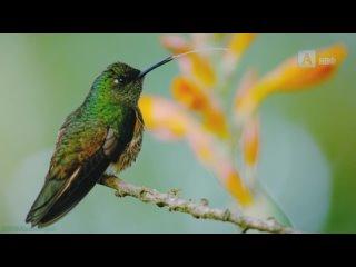 «Невозможные животные с Патриком Арье (02). Тропические леса» (Познавательный, природа, флора, фауна, 2021)