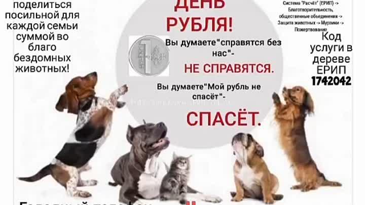 VID_43110206_234207_095.mp4