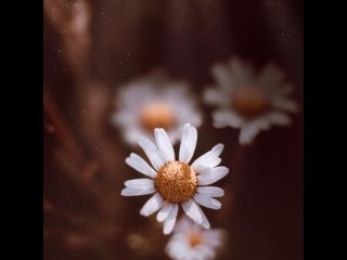Что подсказал вам наш цветок?