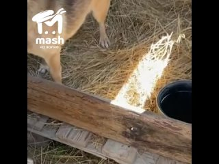Под Керчью в лесу нашли брошенного пса