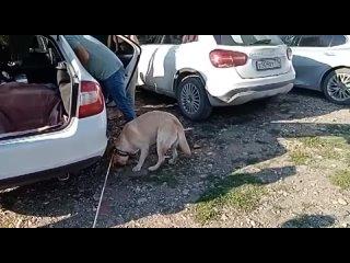 Видео от «Актырнак» Клуб владельцев собак-помощников РБ