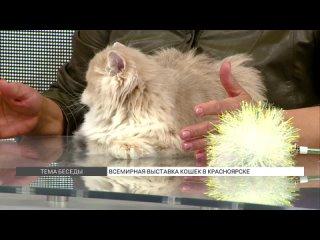 Всемирная выставка кошек в Красноярске