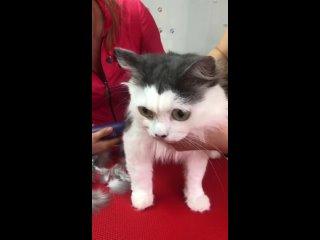 Стрижка собак и кошек   груминг   Севастополь kullanıcısından video