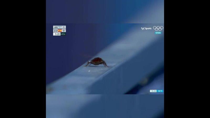 Таракан на Олимпиаде в Токио