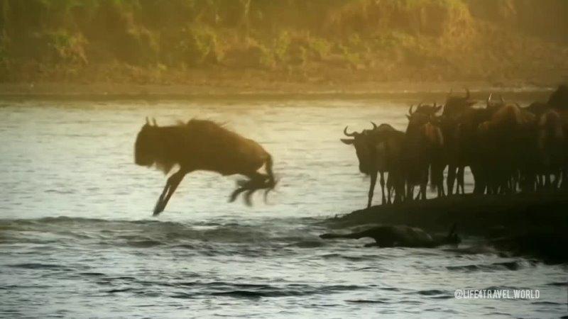 Кения Великая Миграция