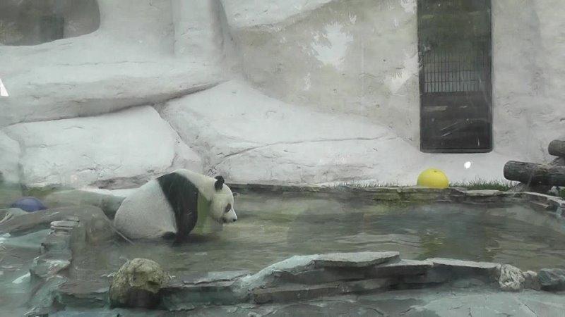 Зоопрак Панда