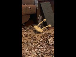Видео от Натальи Шеиной