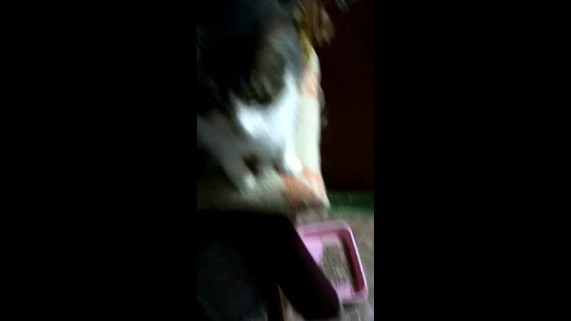Видео от Группа зоозаботы Счастье в дом г Уфа