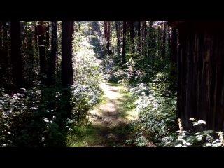 Video by Dear Deer
