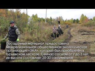 Video by Stanislav Cherdantsev