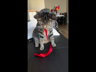This is her favorite toy and her favorite way to play