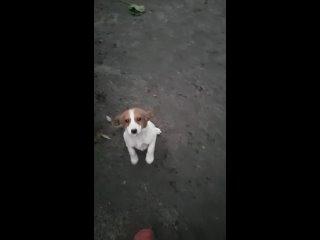 Video by Помощь животным Чаплыгин