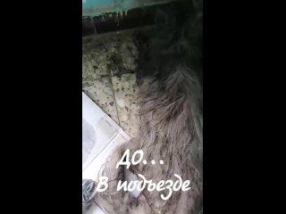 """Video by Новости приюта """"Кошкин дом"""" г. Тольятти"""