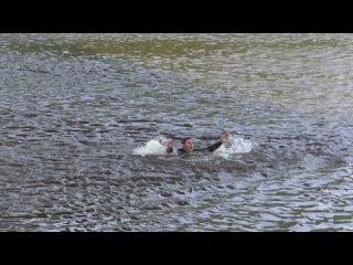 Видео от ГУ МЧС России по Тюменской области