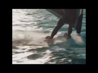 Видео от Саши Сорокина
