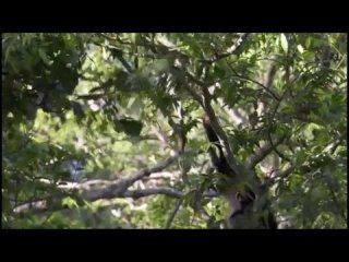 Планета Земля. BBC. 8-я серия - Джунгли / Jungles