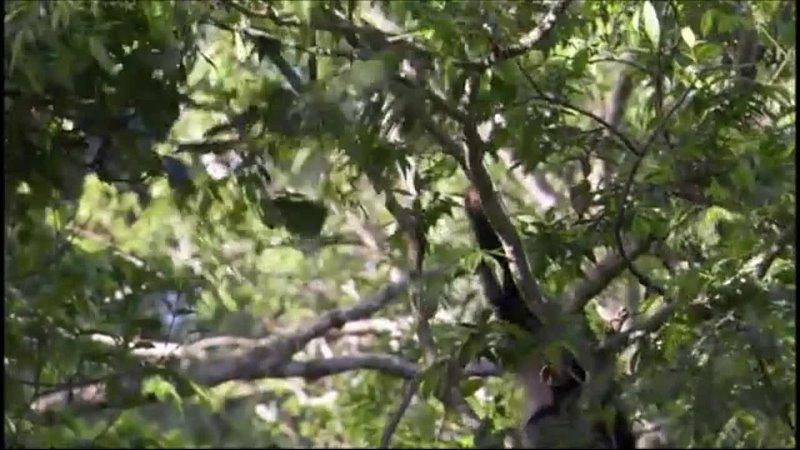 Планета Земля BBC 8 я серия Джунгли Jungles