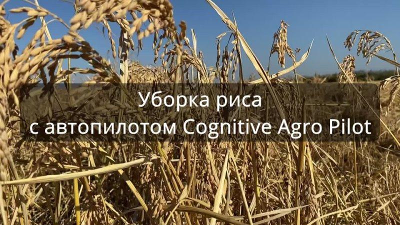 Уборка риса с помощью Cognitive Agro Pilot