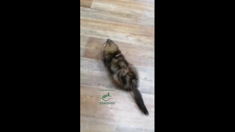 MovaviClips Video 20211026