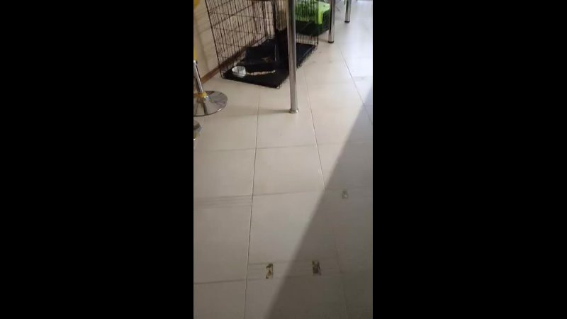 Video 7c3a88bccc9b77913f27d5905c228e08