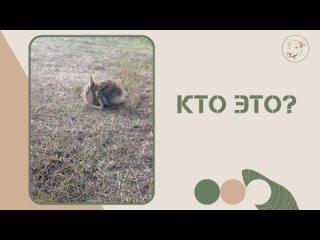 Видео от Карпов Двор