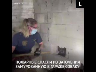 Пожарные спасают замурованную в стене собаку