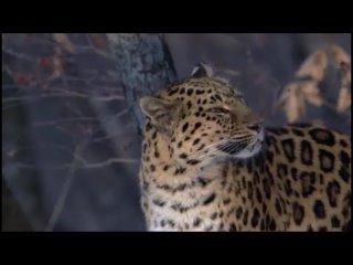 Планета Земля. BBC. 10-я серия - Сезонные леса / Seasonal Forests