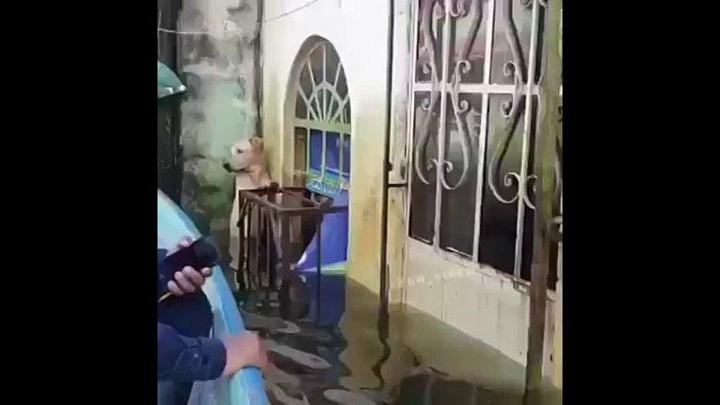 Видео от Обителя Миры