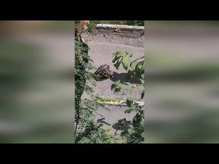 Огромная хищная птица напугала жителей одной из улиц в Дзержинском районе