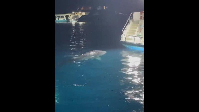 акула 7 mp4