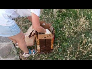Video by 4 лапы|Старый Оскол|Помощь бездомным животным