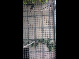 Vídeo de Помощь диким птицам ЛНР и ДНР