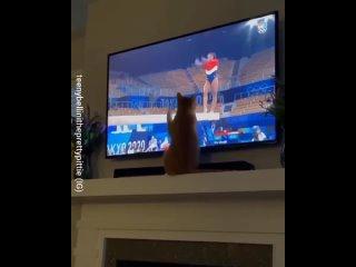 На время олимпиады все становятся спортсменами
