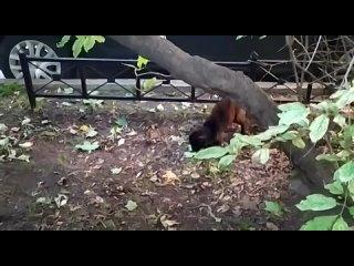 Видео от Юлии Кемарской